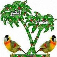 Saleh4742